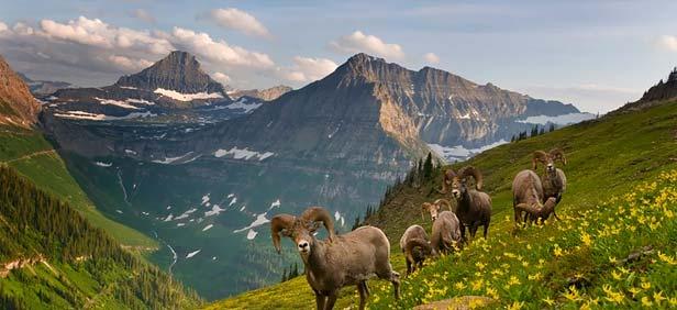 Glacier National Park Montana Usa Travel Guide Transnational Waterton Glacier International Peace Park