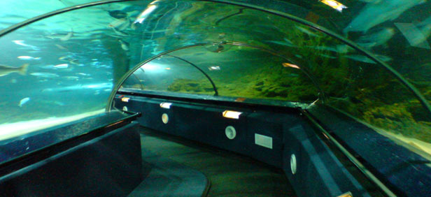 Kelly Tarltons Sea Life Aquarium- Kelly Tarltons Sea Life Aquarium ...