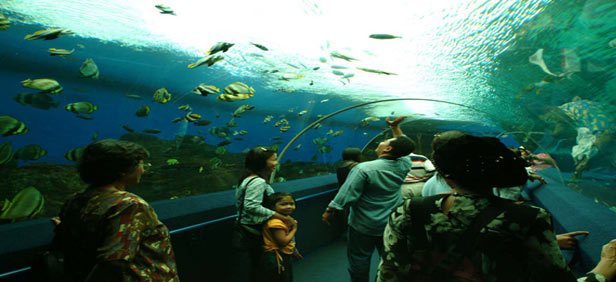 Underwater World, Langkawi ? JourneyMart.com
