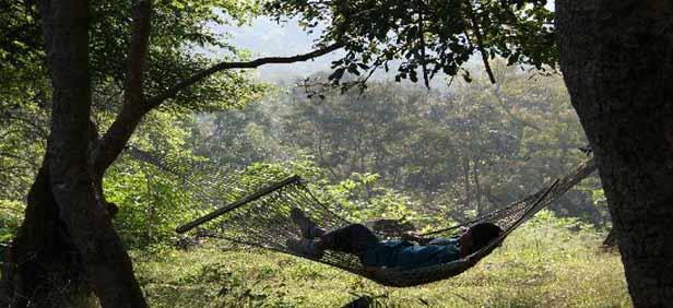 BR Hills - BR Hills Karnataka - Biligirirangan Hills - BR Hills ...