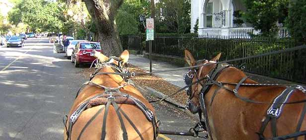 Best Time To Visit Charleston Sc When To Visit