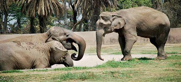 Chhatbir Zoological Park