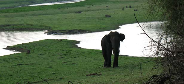 Kabini River Lodge Where To Stay In Kabini Hotels And
