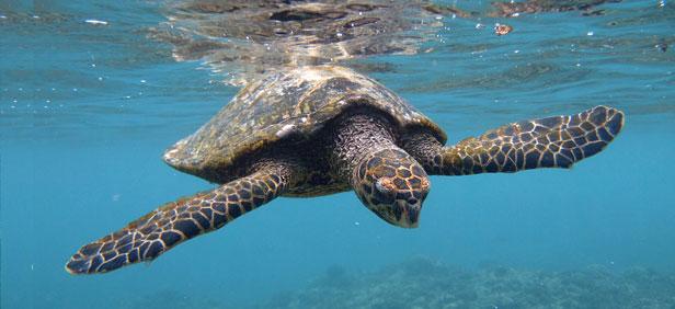 Best Time To Visit Seychelles When Go Travel Peak Season