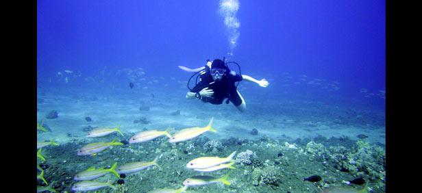 Scuba Diving Activity